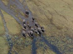 21-botswana-1-1 Magnificent game viewing in Chobe National Park.jpg