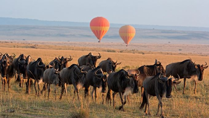 Kenya luxury great migration safaris iStock-513903233.jpg