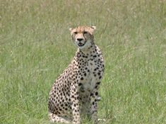 124-namibia-1-1 learn about cheetah lead.jpg