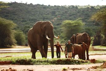Ol Jogi Wildlife Rescue Center - Elephants.jpg