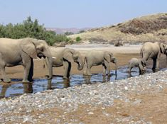 132-namibia-1-1 elephants lead.jpg