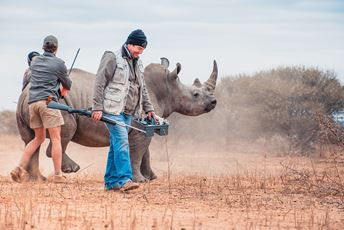 South Africa conservation safari - rhino conservation - Marataba.JPG