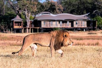 7. Xigera lion in front of lodge.jpg