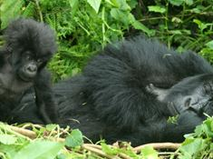 gorilla safaris and trekking lead.jpg