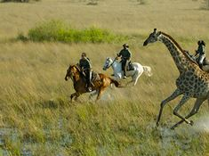 2-horse-riding-safari-in-botswana-1-1 lead.jpg