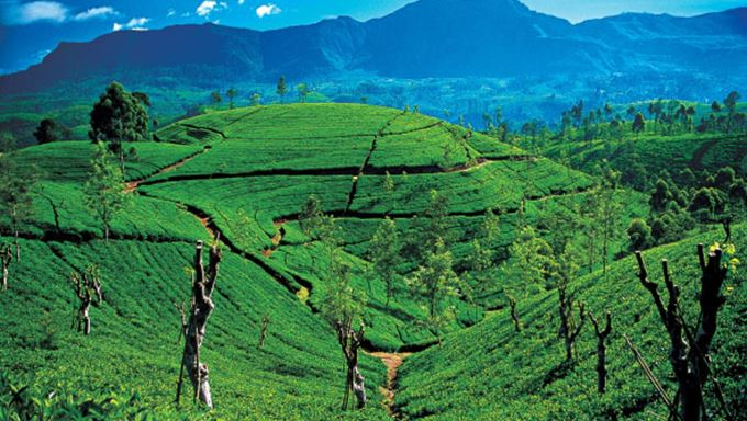 highlands region tea plantations lead.jpg
