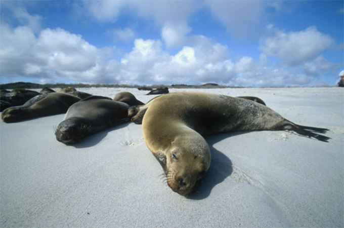 Galápagos wildlife cruises lead.jpg