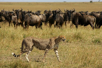 What makes the Best Safari in Tanzania lead.jpg