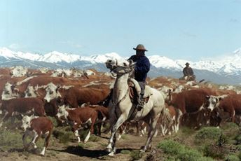 The best Cattle round-ups in South America.jpg
