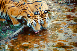 Wildlife safari India.jpg