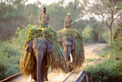 Kulu Valley and elephant procession in Mysore.jpg