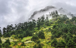 Bailey Trail trek in Arunachal Pradesh.jpg