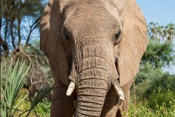 Blog - Africa - This Wild Life 1 Elephant Watch Camp bull.jpg