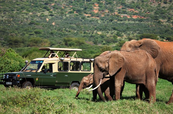 game drive Stevie Mann 2.jpg
