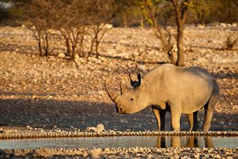 Blog - Africa - Namibia The Best value luxury safari holiday in Africa for 2016 - Rhino - Namibia - OEvans.jpg