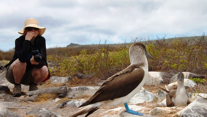 Galapagos - Private charter - Cormorant Cruise - Blue-footed Booby.jpg
