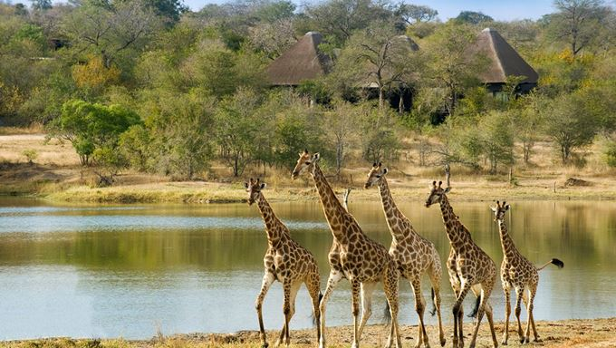 Sabi Sands Game Reserve, South Africa – The Explorations Company