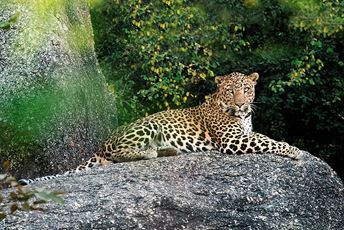 Blog - Jawai Leopard Camp - Leopard Rock.jpg