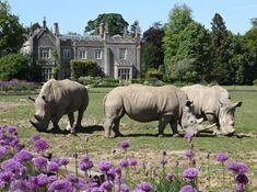 Cotswold Wildlife Park House with Rhinos.jpg