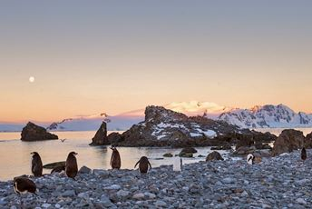 Polar Latitudes - Chinstrap Penguins at Moonrise.jpg