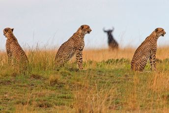 Norman Carr Safaris - Liuwa Plain (48) - Copy 2.jpg