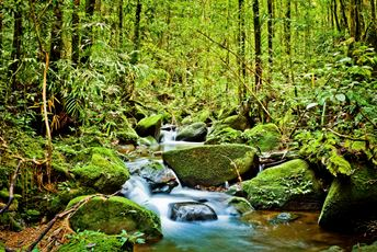 Asia - Sri Lanka - Rainforest - iStock_000023415464Medium.jpg