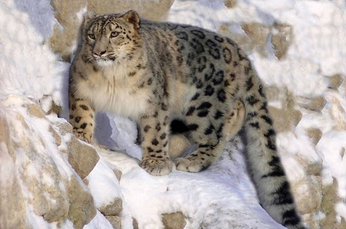 What are Asia's most endangered species? - Explorations Co