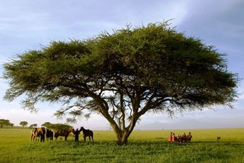 Africa-Kenya-Riding-Safari-Dinner under tree.jpg
