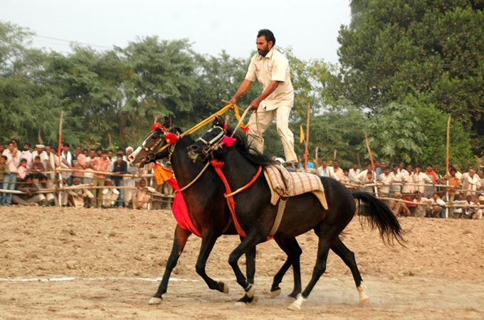Asia - India - Bateshwar Animal Fair - Horse Show.jpg