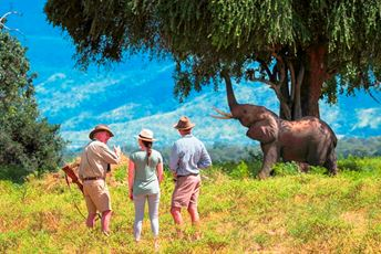 Africa - Zimbabwe - Johns Camp - Mana Pools - Walking safari.jpg
