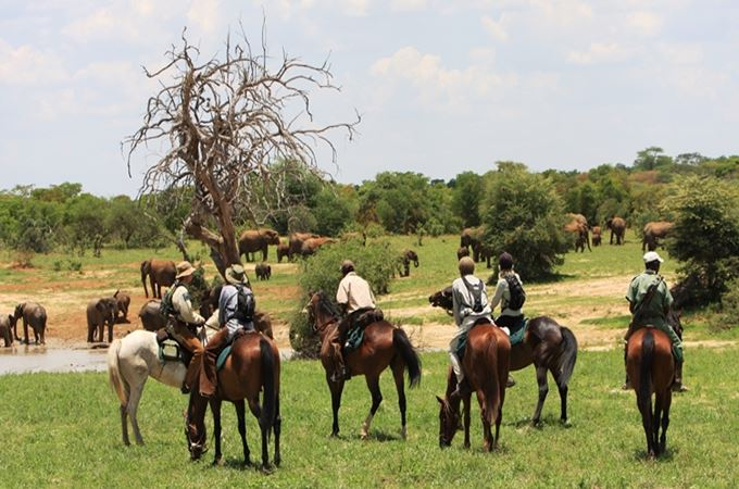Cow herd and riders.jpg