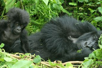 Africa - gorilla-safaris-and-trekking-lead.jpg