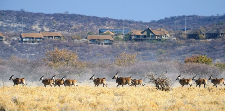 4 Namibia - Safarihoek_Lodge.jpg