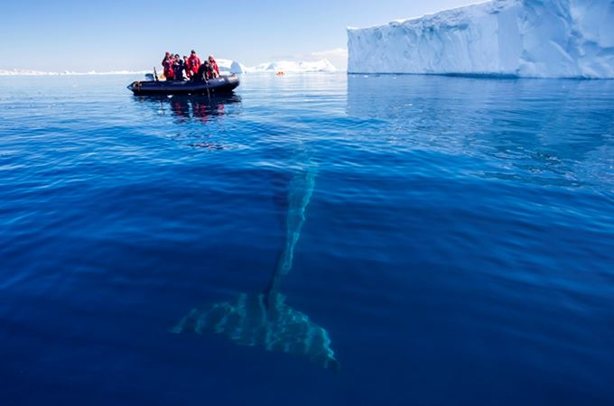 Polar Regions - Antarctica - Antarctic Peninsula - Whale below Zodiac.jpg
