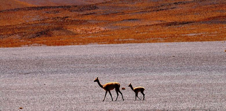 6 -  Argentina - Acay Pass - Route 40.jpg
