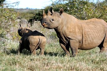 Kenya - Black Rhinos Mother and baby.jpg