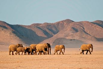 DAMARALAND DESERT ELEPHANTS Olwen Evans Damaraland Camp.jpg