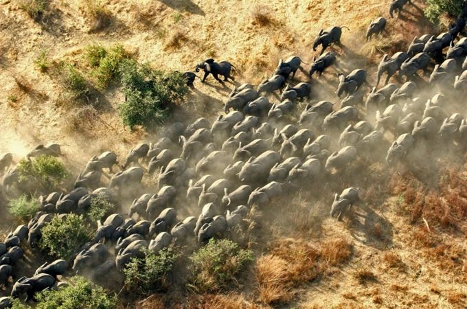 Herd of elephant viewed from air on a Chad flying safari in Zakouma National park