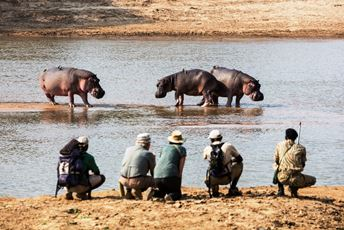 Remote Africa Safaris - Mwaleshi Camp hippo view - Scott Ramsay.jpg