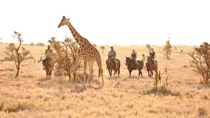 Horseback Safari with Giraffe in Lewa, Kenya