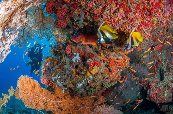 Diving vivid coral reefs in Seychelles with varied marine life
