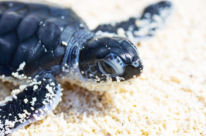 Turtle hatchling on the beach