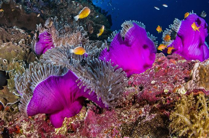 Vividly coloured marine life in the corals of the Seychelles outer islands