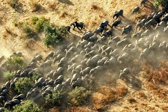 Stunning aerial image of the large herd of elephant in Zakouma, Chad