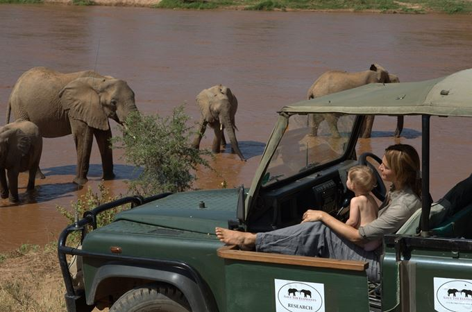 Elephants on game drive with Elephant Watch and Save the Elephant