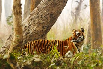 India - tiger-in-its-prime-habitat.jpg