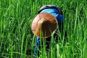 Myanmar Eastern Shan State - Opium Trail villager working in field.jpg