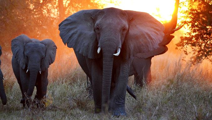 Moz Gorongosa - elephants at sunset - Jean Paul Vermeulen.jpg