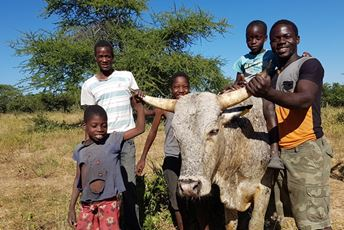 African Bush Camps - Conservation - Cattle Health Program.jpg