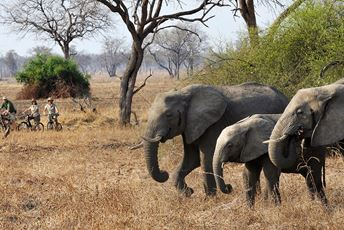 Zambia - cycling-safaris elephant viewing - Tafika.jpg